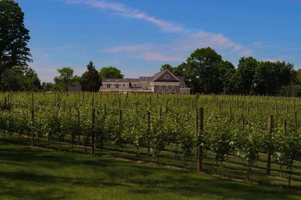 Del Vino Vines